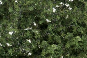 Zelené lístia (Fine-Leaf Foliage ™ Medium Green) - F1131